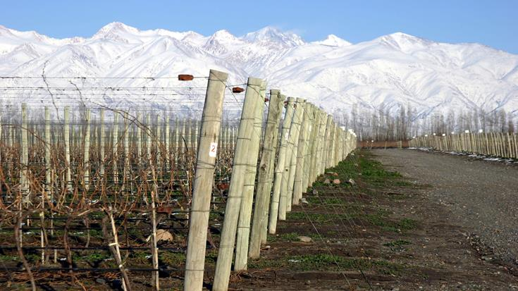 Seriously cool: the allure of cool-climate wine