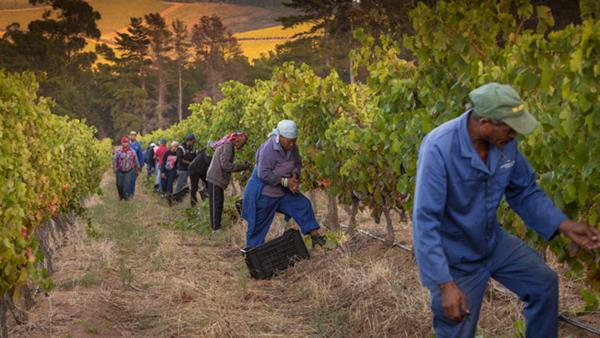 Harvest 2017: South Africa