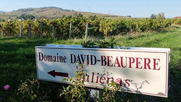Blog: Burgundy and Beaujolais heatwave update