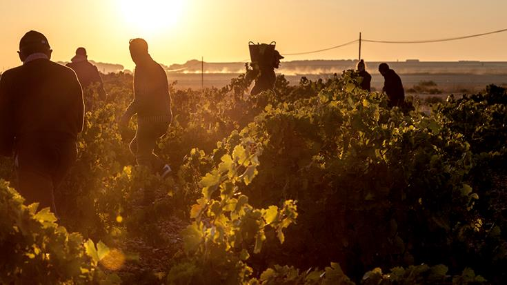 Harvest 2019: Spain and Portugal
