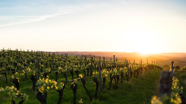 Burgundy: A wonder of the wine world
