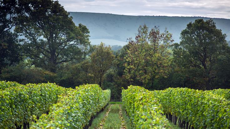 Bibendum's Homegrown Heroes: Meet our English wine family (Part 1)